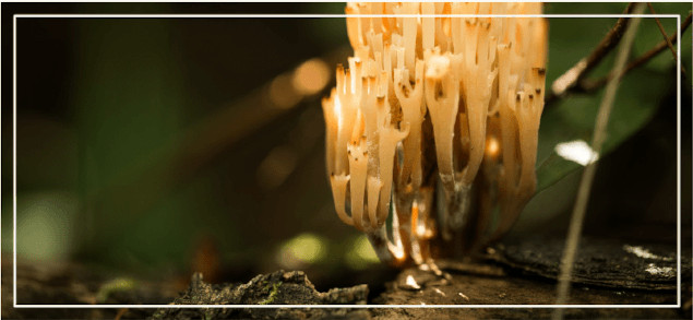 mycelium-1
