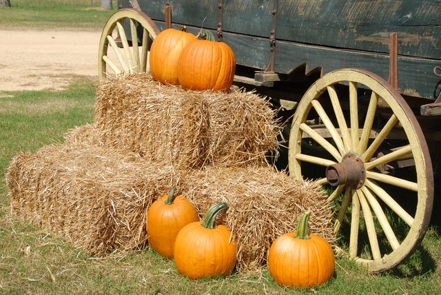 Eco-friendly ways to celebrate halloween - organic pumpkins