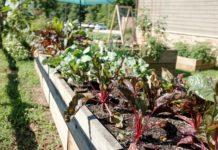 self-sustaining garden
