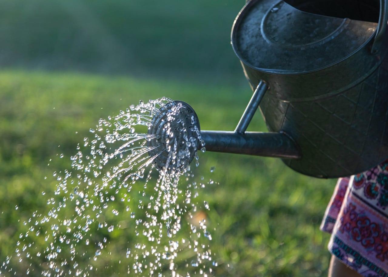 self-sustaining garden - conserve water