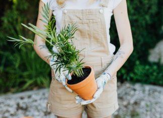 Eco-friendly summer gardening