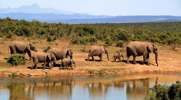 Satellite Technology in Wildlife Conservation