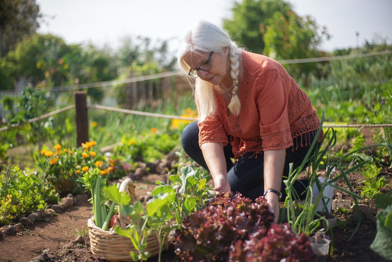 buy organic food or grow your own
