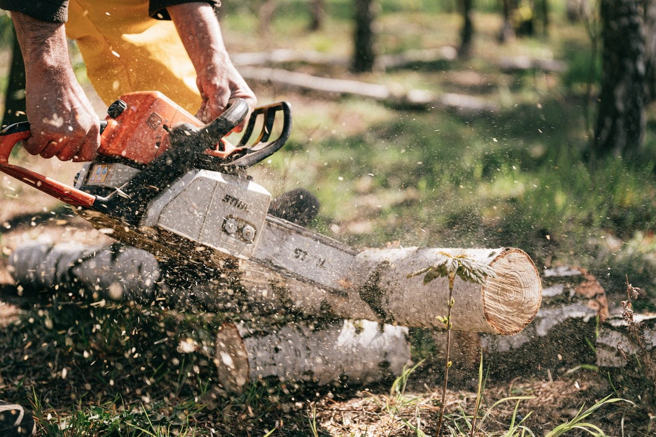 the don'ts when removing dead trees
